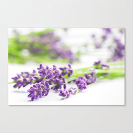 Lavender herb still life Canvas Print