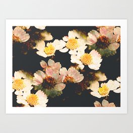 Colorful flowers with black background Art Print