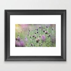 lavender summer Framed Art Print