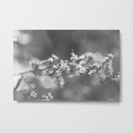 Asters Aglow - Flower Photography Metal Print