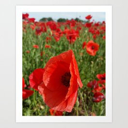Poppy in a Field 3 Art Print