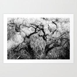 Cottonwood in Spring bw Art Print