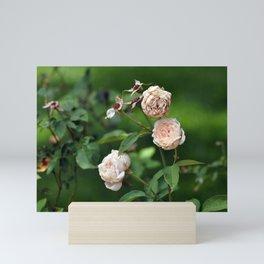 Cream Roses Mini Art Print