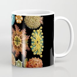 Ernst Haeckel - Scientific Illustration - Ascidiae Coffee Mug
