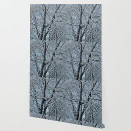 Big Tree In Snow and Blue Sky Wallpaper
