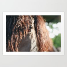 sunrise stallion Art Print