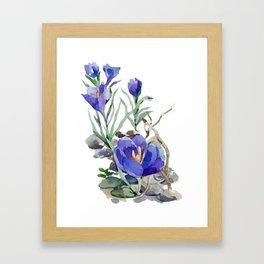 Crocus in Spring Framed Art Print