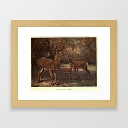 Vintage Virginia Deer Painting (1909) Framed Art Print