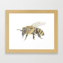 The Honey Bee Framed Art Print