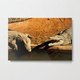 Crocodile Bonding Metal Print