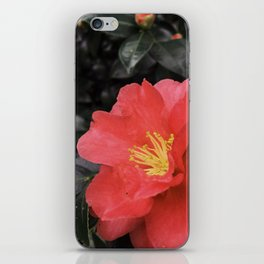 Sweet Crazy Love iPhone Skin
