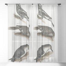 89 The Varied Creeping Warbler (Mniotilta varia) 90 The Brown Creeper (Certhia americana) 91 The Whi Sheer Curtain