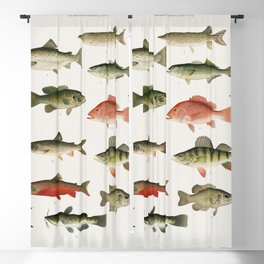 Illustrated Denton Fish Chart of Fishes of North America Blackout Curtain