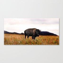 Wichita Mountains Buffalo Canvas Print