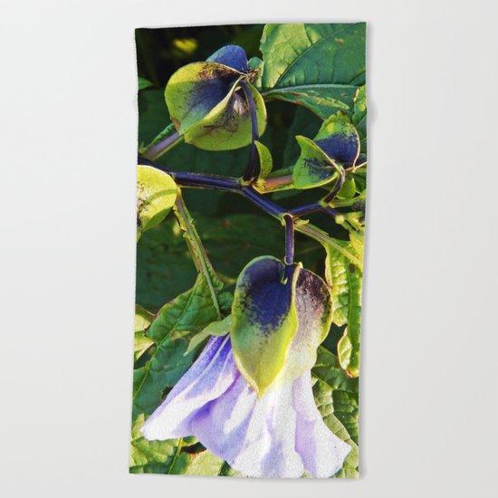 Shoo Fly - Apple of Peru - Nicandra Beach Towel