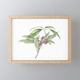 Star Anise Botanical Illustration Framed Mini Art Print