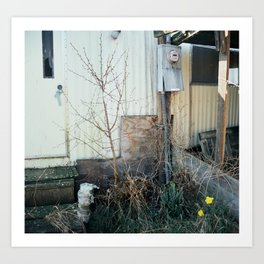 shack/daffodils (spring 2015) Art Print