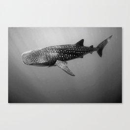 Big Fish, B & W Canvas Print