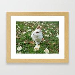 Spring of rabbit Framed Art Print
