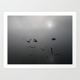 Seagulls in the Fog Art Print