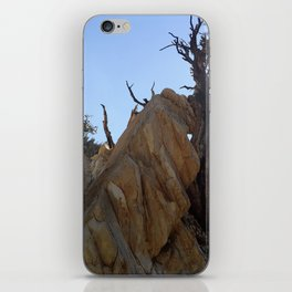 Tree leaning on rock iPhone Skin