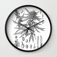 cannabis Wall Clocks featuring cannabis sativa by Oxxygene