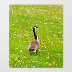 Goose in a field of flowers Canvas Print