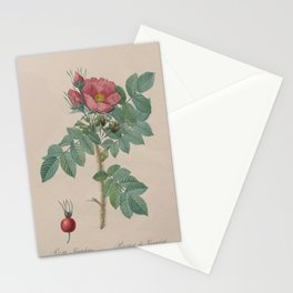 Rosa JP Redoute Stationery Cards