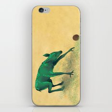 Aquilapes Foal Discovering A Hedgehog iPhone & iPod Skin