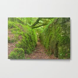 Ancient Emerald Forest Trail Metal Print