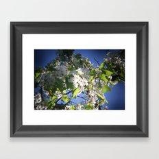 blossoms on vermont Framed Art Print