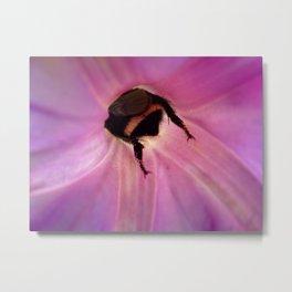 Bee Hind Metal Print