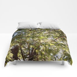 Redwood Ceiling  Comforters
