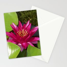 red water lily VI Stationery Cards
