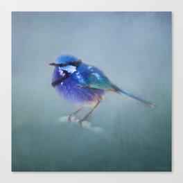 Blue Fairy Wren Canvas Print