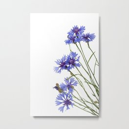 Slant blue cornflower flowers Metal Print