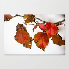 Autumn On A Branch Canvas Print