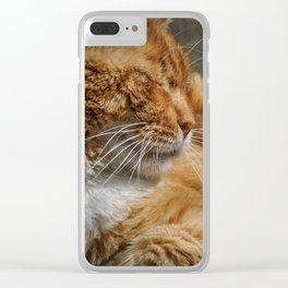 Cinque Terre Cat Clear iPhone Case