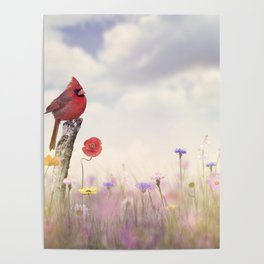 Male Northern Cardinal in a flower field Poster