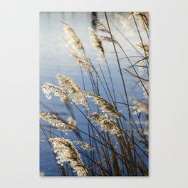 Camargue nature Canvas Print