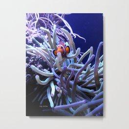 Clown Fish Anemone Metal Print