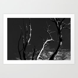 Winter treescape Art Print
