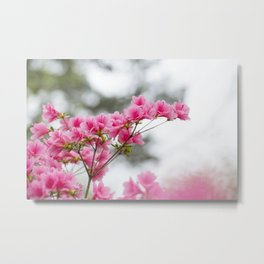 Spring Pinks Metal Print