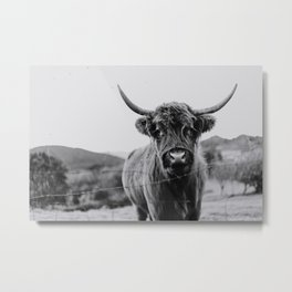 Highlander cow portrait   Black and white nature photography   Photo Metal Print