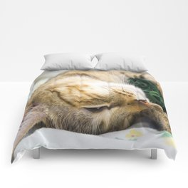 Sleeping kitten Comforters