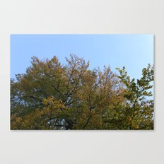 Look Up More Often Canvas Print