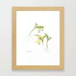 3 Stem flowering yellow and purple cattleya orchid Framed Art Print