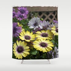 Yellow and Purple African Daisies Shower Curtain