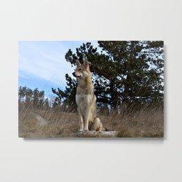 Czech Wolfdog Metal Print