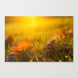 The fallen maple leaves Canvas Print